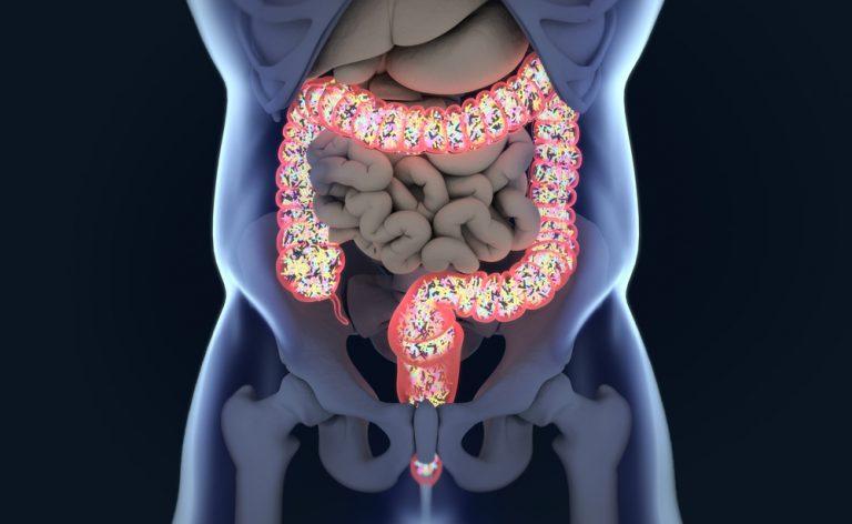 A ação da microflora intestinal no equilíbrio metabólico